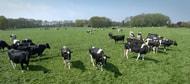 Mit top agrar nach Irland - Jetzt anmelden!