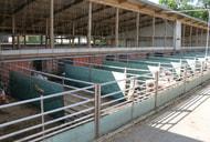 TA-Luft: Öffnungsklausel für tiergerechte Haltungsverfahren