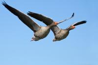 Behörden erwarten neue Vogelgrippeausbrüche diesen Winter