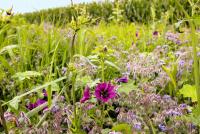 Greening-Neuerungen sollen zu Jahresbeginn in Kraft treten