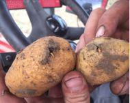 Diskussionsabend: Erdäpfelanbau in NÖ vorm Aus?