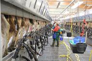 Ausblick 2019: Weniger Milch und unsichere Rahmenbedingungen