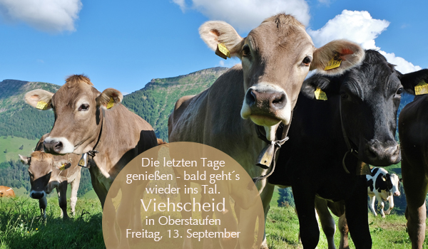 Kühe vor Hochgrat