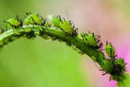 Ungläubiges Staunen über US-Insektenstudie