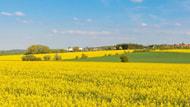 UFOP reicht Leitlinie des Integrierten Pflanzenschutzes im Rapsanbau ein