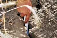 EU-Ernteprognose für Getreide erneut gekürzt