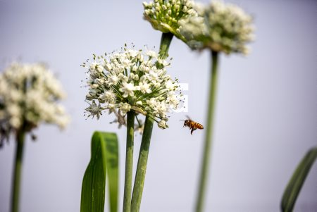 Bees and Flowers in Dhaka