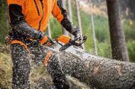 Lagermöglichkeit von Schadholz auf beihilfefähigen Flächen verlängert