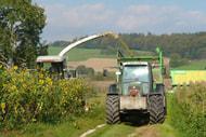 Wildpflanzenmischungen gut auf Grenzertragsflächen