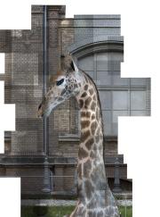 (Foto © Ilit Azoulay, Exhibit 83: STUFFED GIRAFFE (detail from SHIFTING DEGREES OF CERTAINTY, 2014), inkjet print)