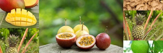 Mango, Ananas, Maracuja, Kakao, Ingwer, Limetten