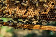 Weltbienentag: Klöckner bleibt beim Nein zu Notfallzulassungen