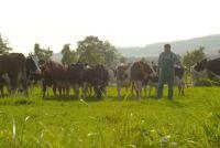 Gestrichene Weideprämie: Niedersachsens Bauern wütend