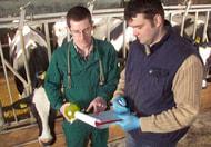 Gebühren für Tierärzte und Notdienst steigen