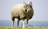 Wolf: Vermittlung des Kanzleramtes noch nicht erfolgreich