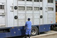 Tierschutzbund enttäuscht über Haltung der EU-Kommission zu Viehtransporten