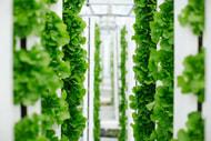 Bayer gründet Start-up für vertikale Landwirtschaft