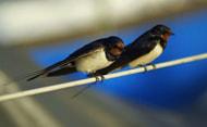 Neonikotinoide auch für Zugvögel gefährlich?