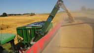 Weizenerzeugung wird globalen Verbrauch nicht decken können