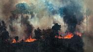 Europäischer Forst und Amazonas-Regenwälder in Not