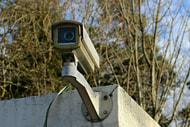 Bundesrat für Videoüberwachung in Schlachtbetrieben