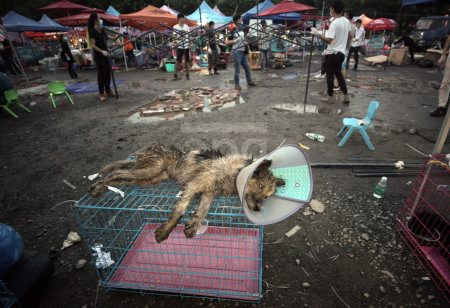 Dogs freed on way to Yulin Dog Meat Festival in Guangzhou
