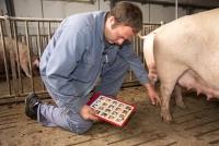 Töten Landwirte kranke und verletzte Tiere zu spät?